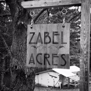 Welcome to Zabel Acres